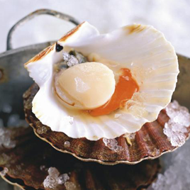 coquillessaintjacques